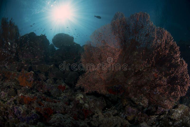 Meeresflora und -fauna auf der Wand mit blauem Hintergrund stockbilder