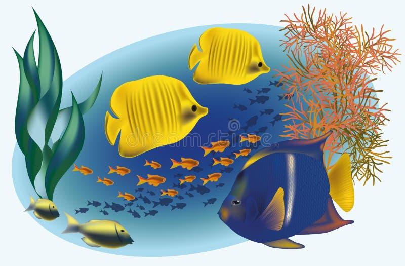 Meeresflora und -fauna mit tropischen Fischen vektor abbildung