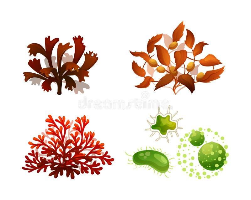 Meeresfloraschattenbildvektor-Satzillustration der korallenroten Meerespflanze Unterwasser lizenzfreie abbildung