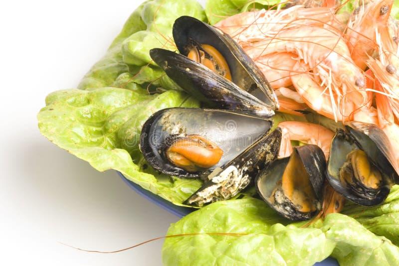 Meeresfrüchte Kostenlose Stockfotografie