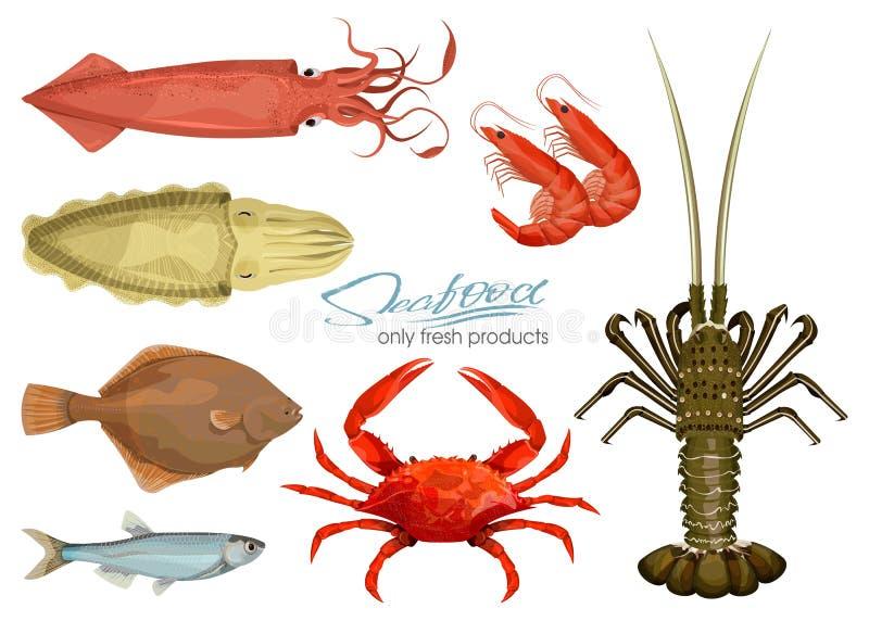Meeresfrüchte in der Karikaturart ikonen Photorealistic Ausschnittskizze Stellen Sie Kalmar, Kopffüßer, Krabbe, Garnele, Languste lizenzfreie abbildung