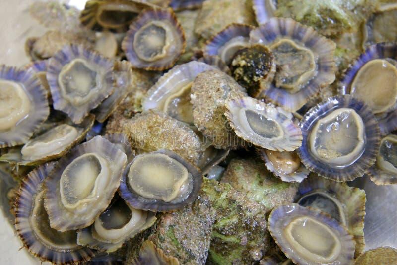 Meeresfrüchte im Wasser stockfotografie