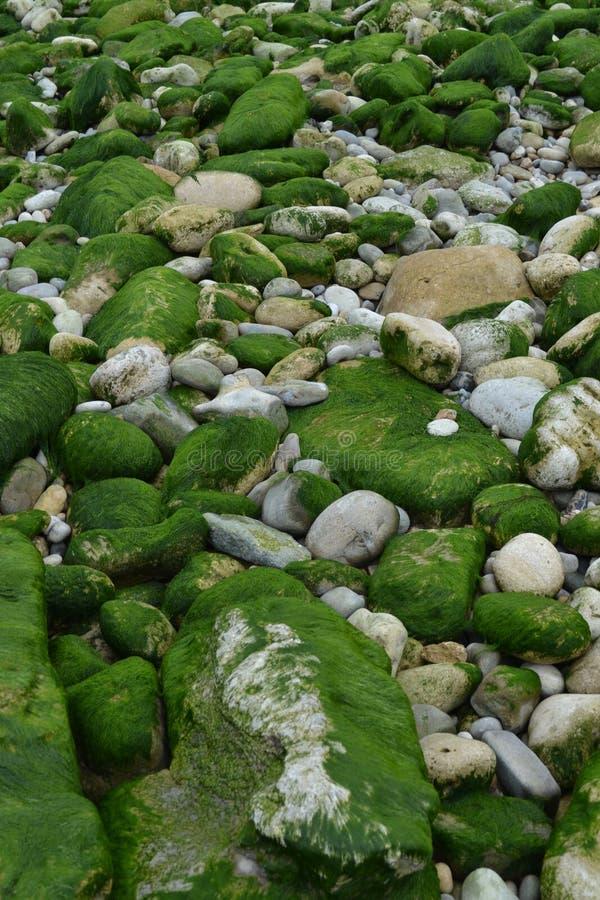 Meeresgrund entsteint Grünalgen lizenzfreie stockfotos