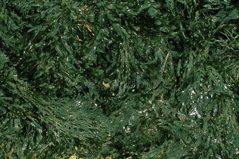 Download Meerespflanze stockbild. Bild von geschenke, weihnachten - 41219