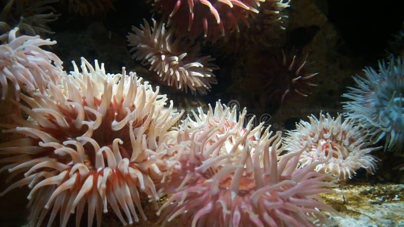 Meerespflanze royaltyfri foto