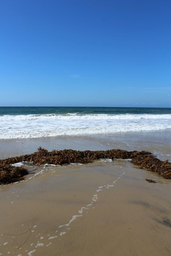 Meerespflanze an Hermosa-Strand Kalifornien in der Los Angeles County, Kalifornien, Vereinigte Staaten stockfotos