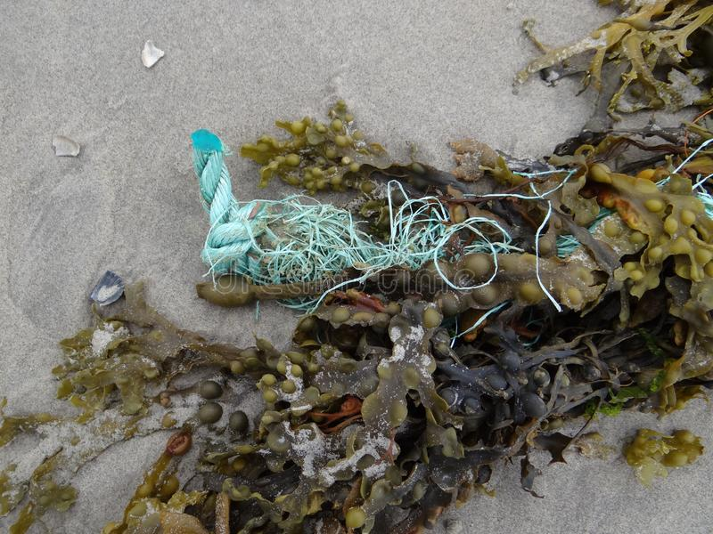 Meerespflanze und Seil lizenzfreies stockbild