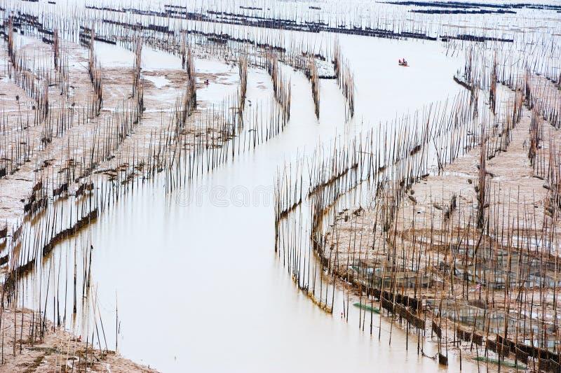 Meerespflanzebauernhof stockbilder