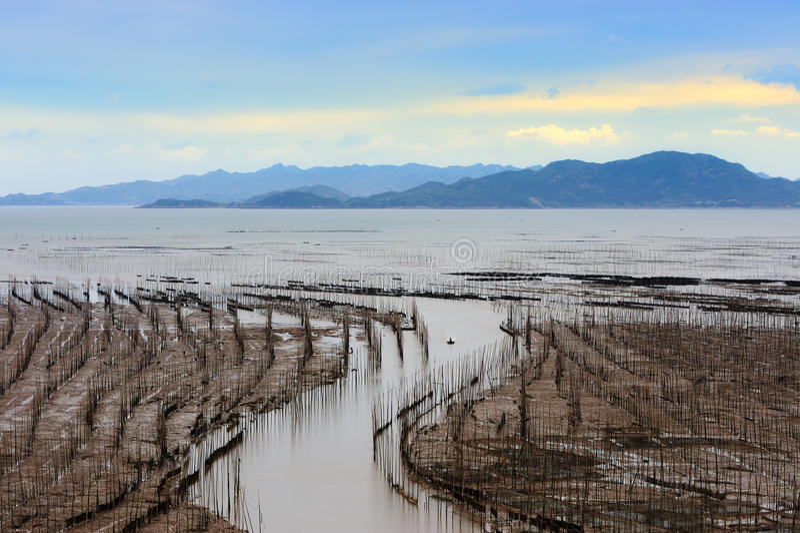 Meerespflanzebauernhof stockbild