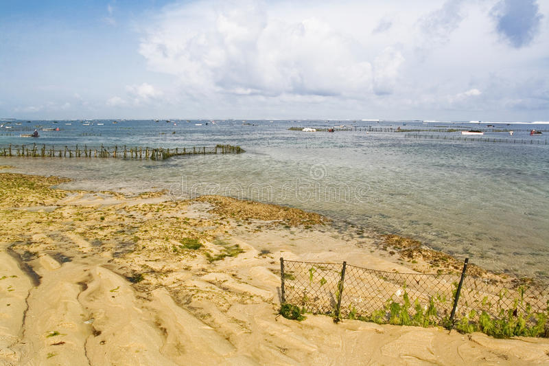 Meerespflanzebauernhof stockfotos