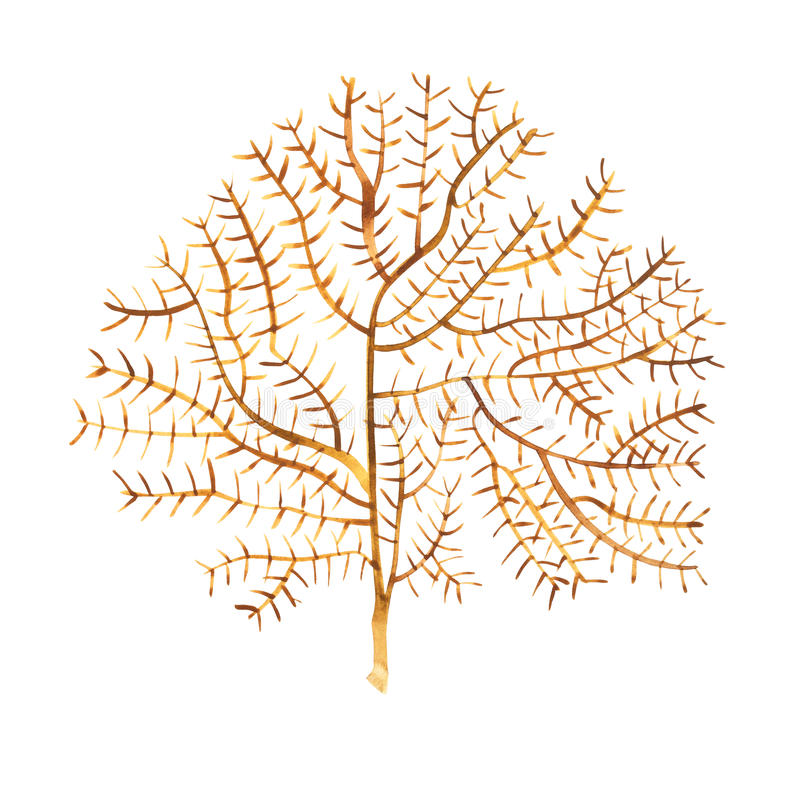 Meerespflanzenseelebengegenstand auf weißem Hintergrund Gezeichnete gemalte Illustration des Aquarells Hand Unterwasseraquarell lizenzfreie abbildung