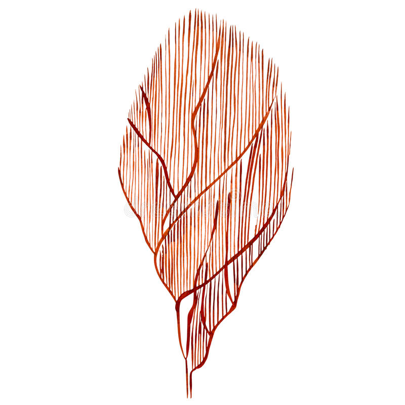 Meerespflanzenseelebengegenstand lokalisiert auf weißem Hintergrund Gezeichnete gemalte Illustration des Aquarells Hand Unterwass lizenzfreie abbildung