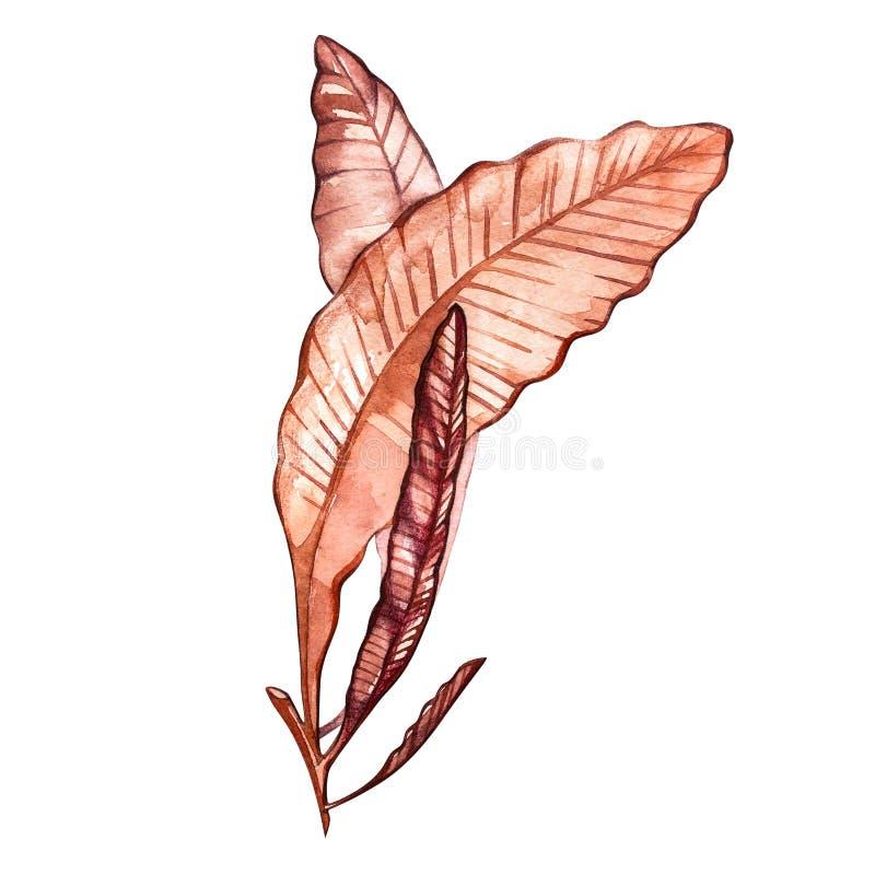 Meerespflanzenseelebengegenstand lokalisiert auf weißem Hintergrund Gezeichnete gemalte Illustration des Aquarells Hand Unterwass stock abbildung