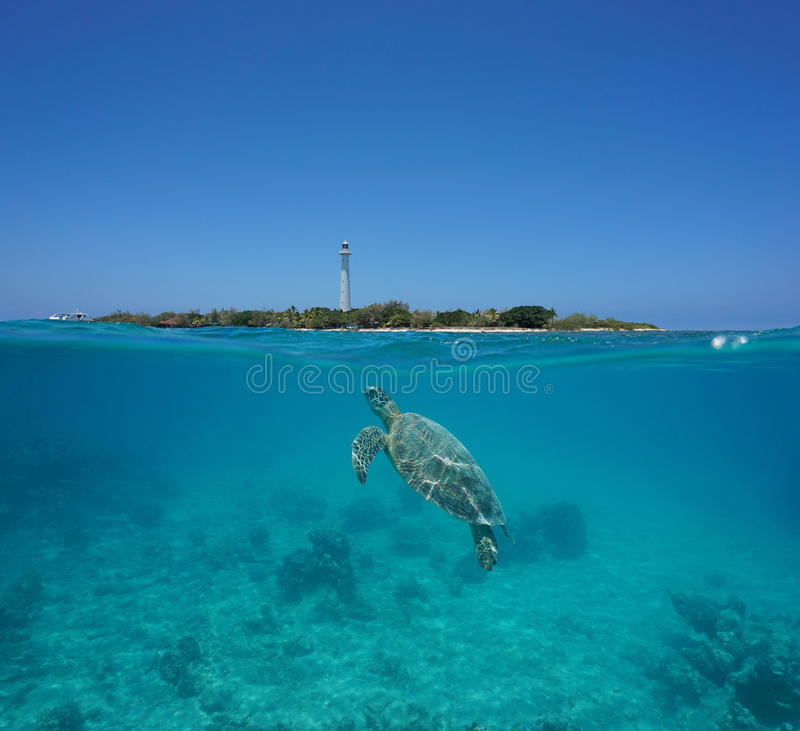 Meeresschildkröte aufgeteiltes Amedee-Insel Neukaledonien stockfotografie