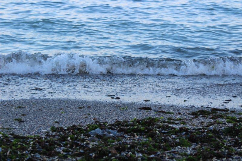 Meereswellen, Sand und Meerespflanze stockfotos