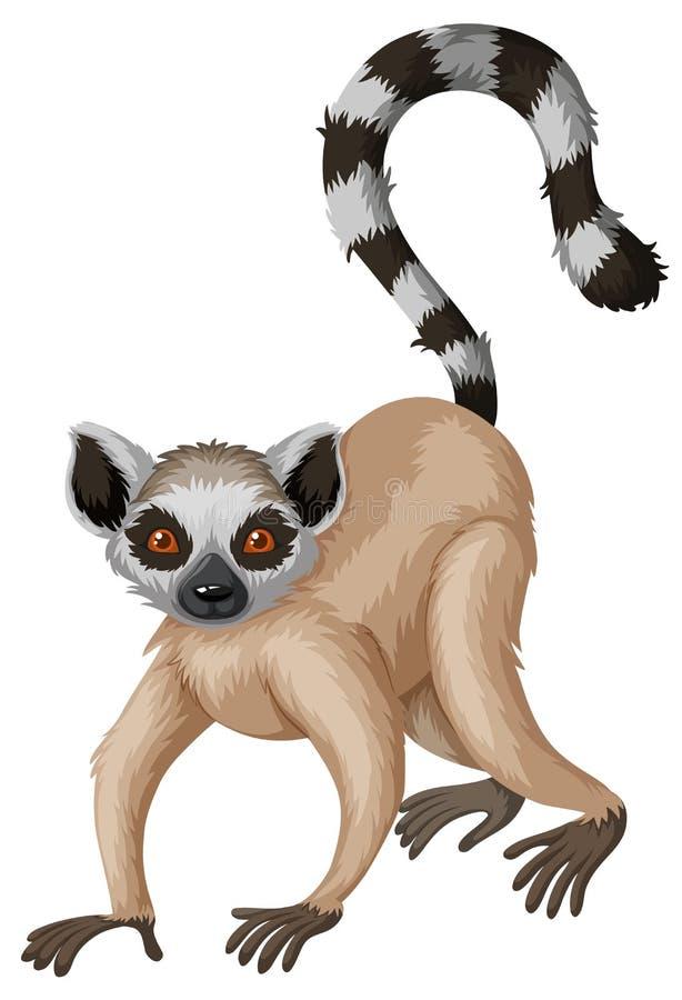 Meerkat με τη μακριά ουρά ελεύθερη απεικόνιση δικαιώματος