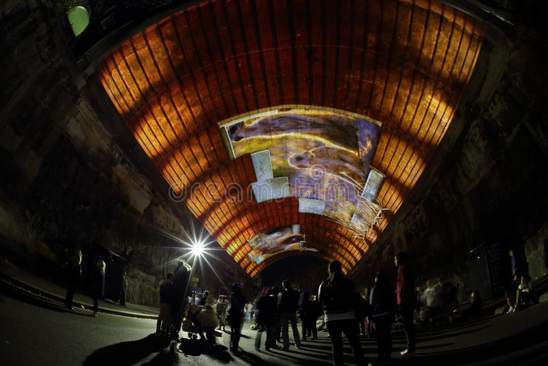 Meerkats in Argyle Tunnel - biografia a Sydney viva immagine stock libera da diritti