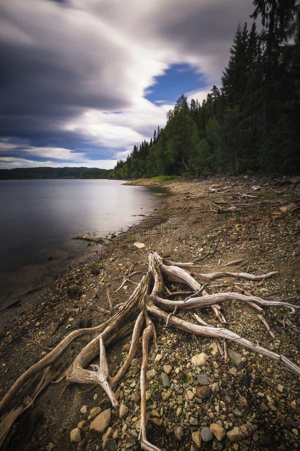 Meerkust en droog hout Noors bergmeer royalty-vrije stock foto's