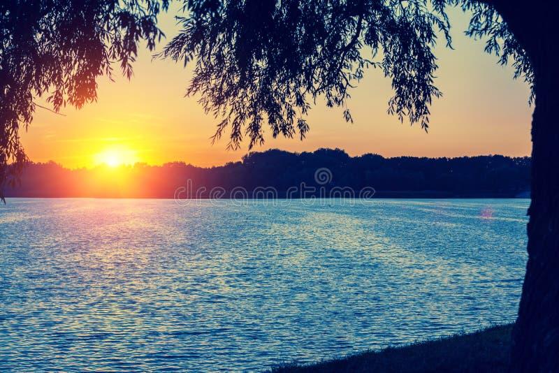Meerkust met bomen bij zonsondergang stock afbeeldingen