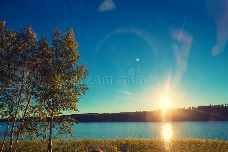 Meerkust met bomen bij zonsondergang stock foto's