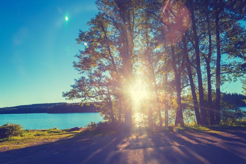 Meerkust met bomen bij zonsondergang royalty-vrije stock afbeeldingen