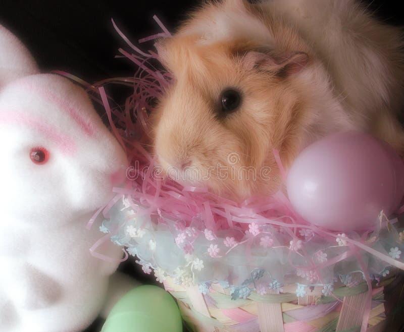 Meerschweinchen Und Kaninchen In Der Ostern-Einstellung Stockbild