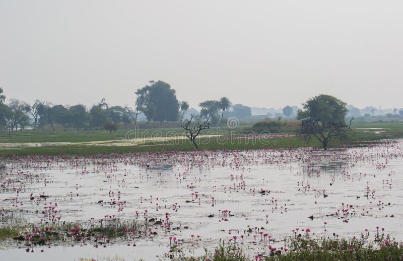 Meerwater Lilly Trees en Landschap royalty-vrije stock foto's