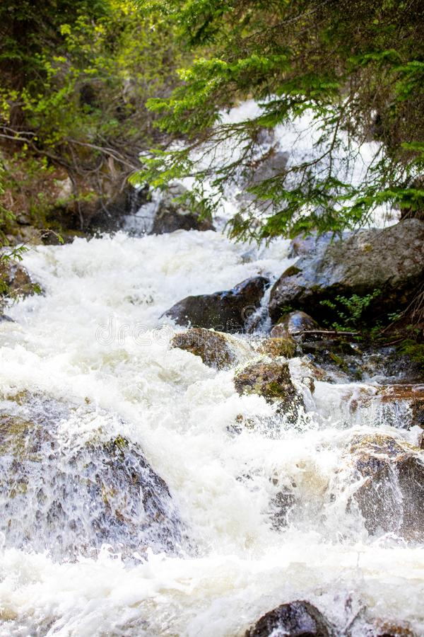 Meeslepende Waterval met Weelderig Gras in Rocky Mountain National Park royalty-vrije stock foto's