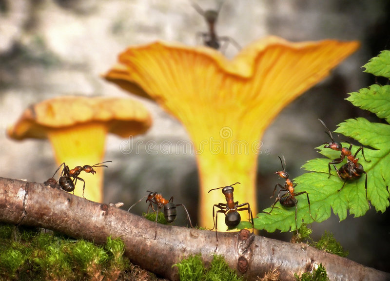 Meeting in anthill. Pack council in anthill. fantasy royalty free stock photography