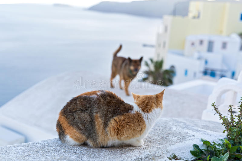 Meeting cats and dogs against the sea. Greece, Santorini royalty free stock image