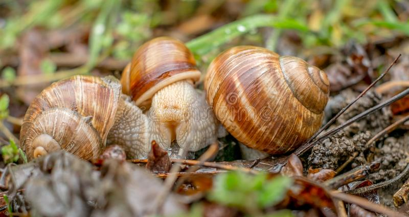 The meeting of snails royalty free stock photos