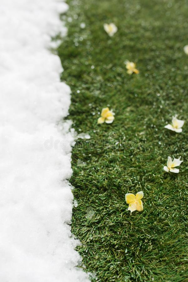 Meeting snow on green grass close up - between winter and spring concept background. Meeting white snow and green grass with flowers close up - between winter stock photos