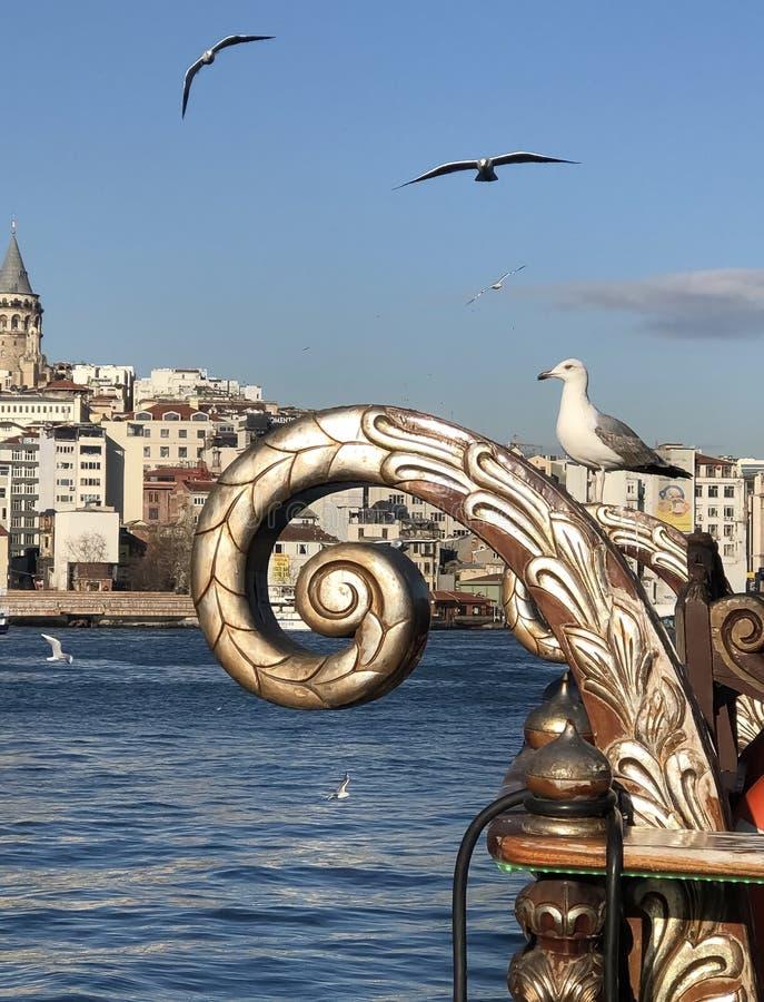 Meeuw het stellen in haven van Istanboel royalty-vrije stock foto's