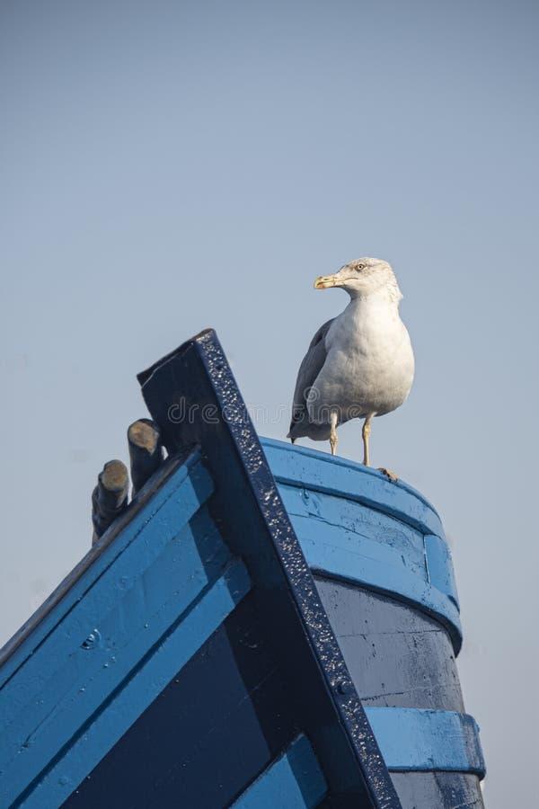 Meeuw op de boeg van kleine blauwe vissersboot wordt gezeten die royalty-vrije stock fotografie