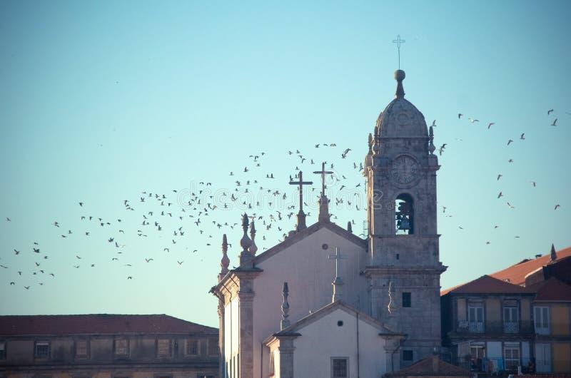 Meeuwen en kerk royalty-vrije stock afbeeldingen