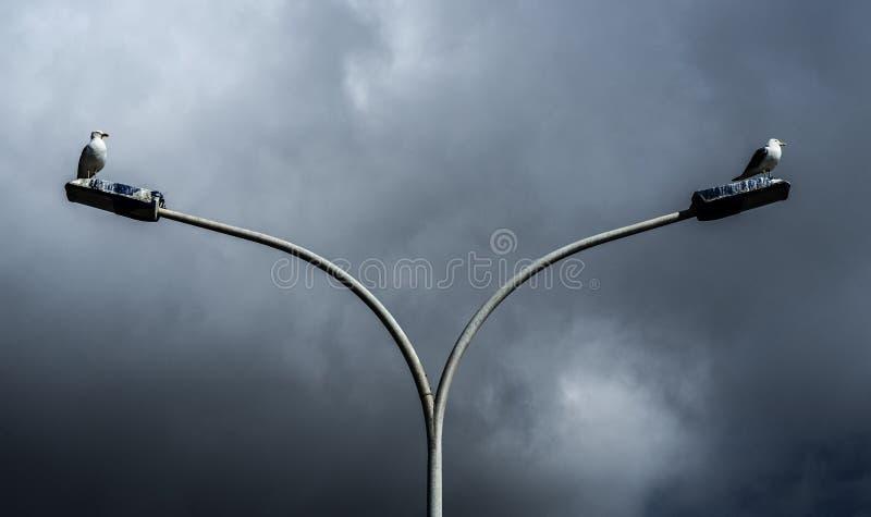 Meeuwen op lantaarnpalen stock afbeeldingen