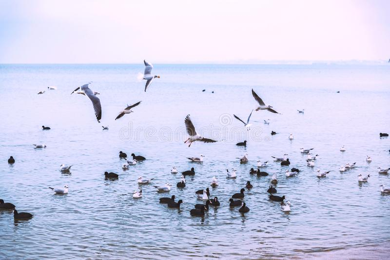 Meeuwenvlieg over het overzees Donker weer stemming vlucht vogels royalty-vrije stock afbeeldingen