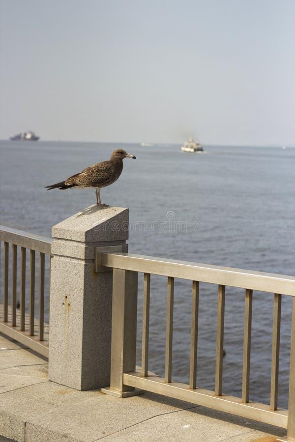 Meeuwvogel stock afbeeldingen