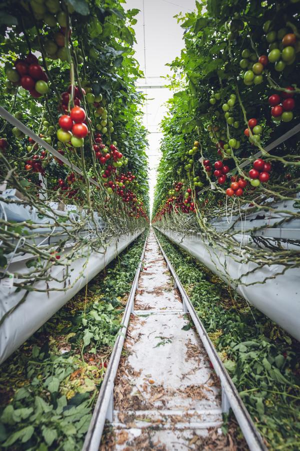 Mega Glasshouse For Tomatoes And Pepper Free Public Domain Cc0 Image
