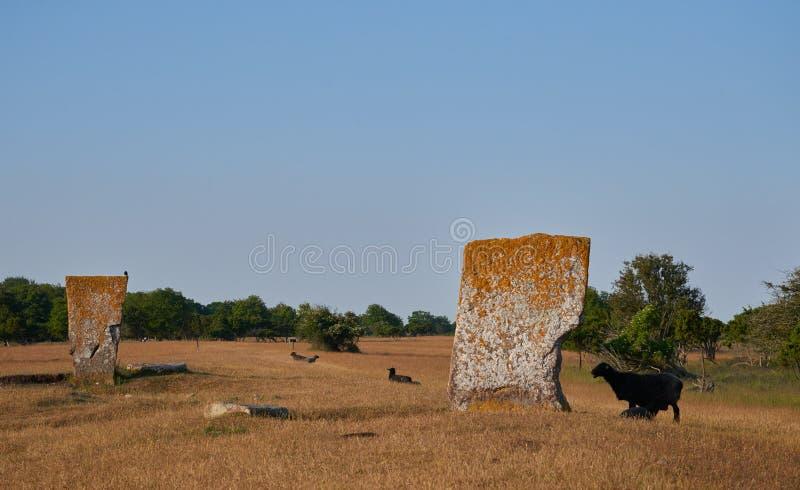 Megalieten en sheeps, Eiland van Oeland, Zweden royalty-vrije stock afbeelding