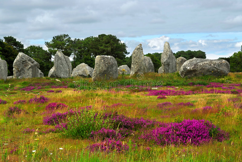 Megalithic monuments in Brittany. Heather blooming among prehistoric megalithic monuments menhirs in Carnac area in Brittany, France stock photos