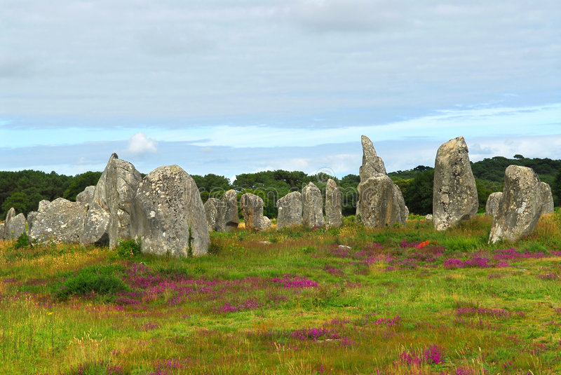 Megalithic monuments in Brittany. Heather blooming among prehistoric megalithic monuments menhirs in Carnac area in Brittany, France royalty free stock photography