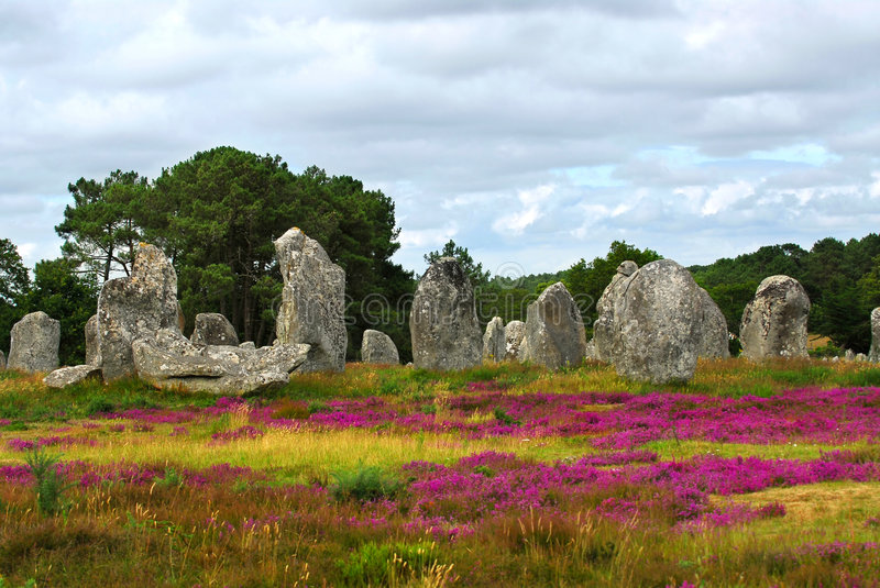 Megalithic monuments in Brittany. Heather blooming among prehistoric megalithic monuments menhirs in Carnac area in Brittany, France royalty free stock photo