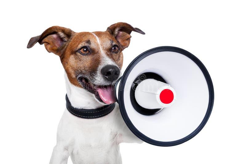 megaphone σκυλιών στοκ εικόνα με δικαίωμα ελεύθερης χρήσης