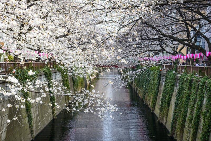 Meguro kanal i Tokyo, Japan arkivfoto