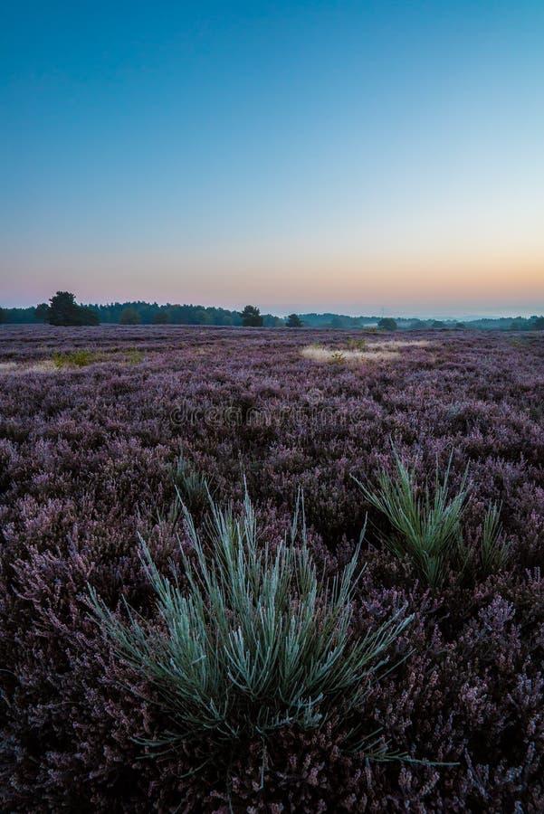 Mehlinger Heide,德国 免版税图库摄影