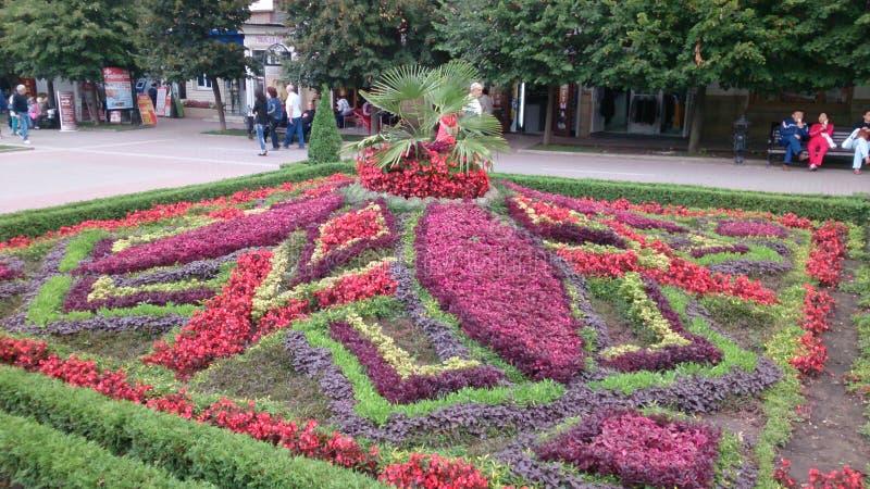Mehr Blumen in der Stadt stockbild