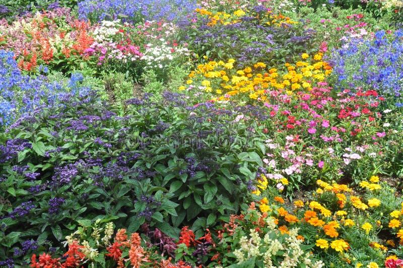 Mehrfache Blumen in einem Garten lizenzfreie stockbilder