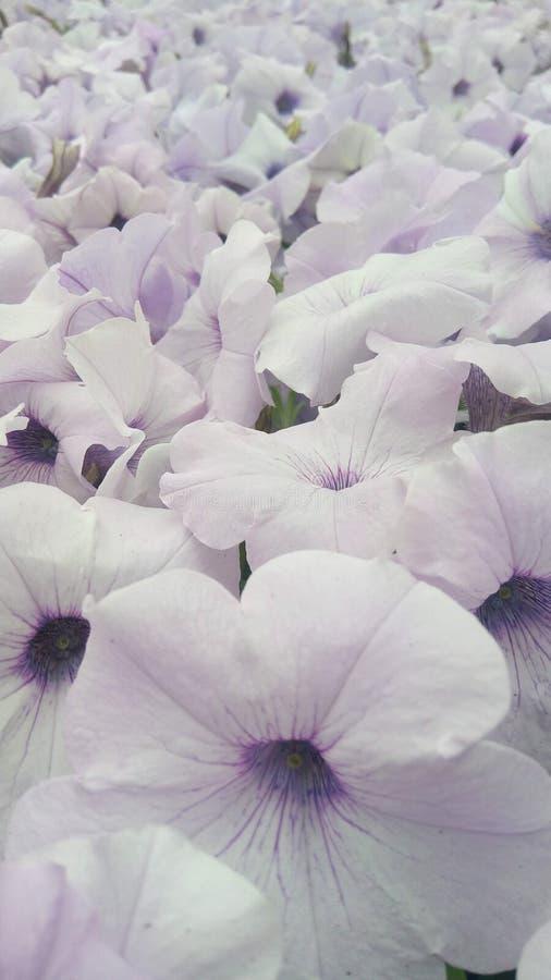 Mehrfache Blumen, helle purpurrote Blumen stockbild