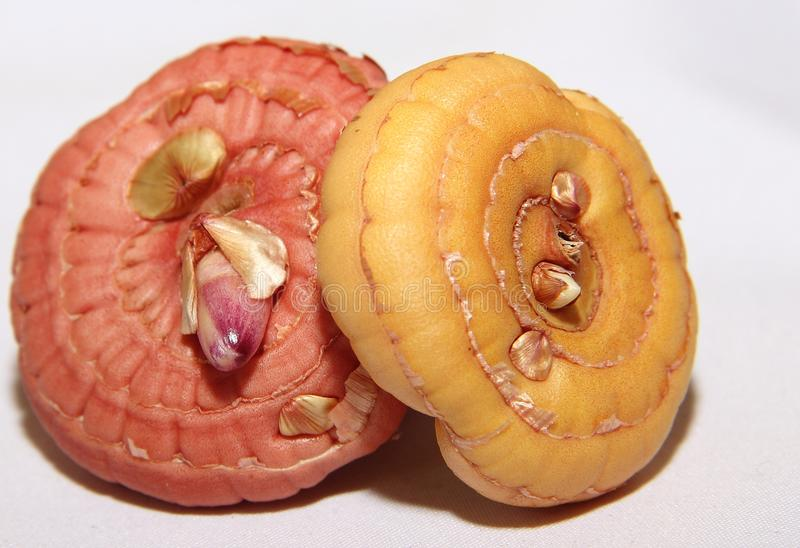 Mehrfarbige Birnen von den gelben und rosa Gladiolen bereit zum Pflanzen mit angebauten Sprösslingen stockbild